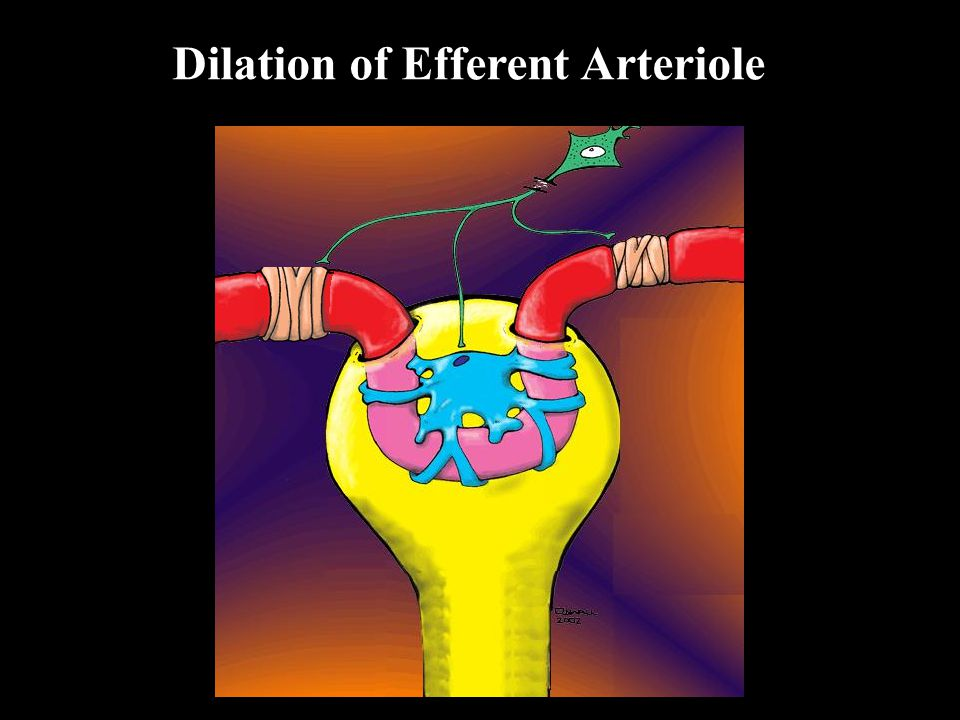 Dilation of Afferent Arteriole