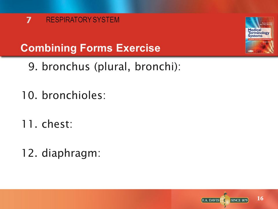 16 RESPIRATORY SYSTEM 7 Combining Forms Exercise 9. bronchus (plural, bronchi): 10. bronchioles: 11. chest: 12. diaphragm: