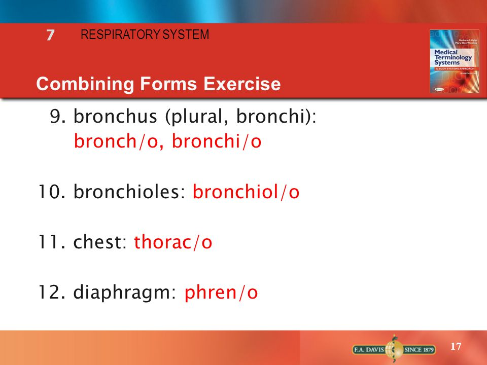 17 RESPIRATORY SYSTEM 7 Combining Forms Exercise 9. bronchus (plural, bronchi): bronch/o, bronchi/o 10. bronchioles: bronchiol/o 11. chest: thorac/o 1