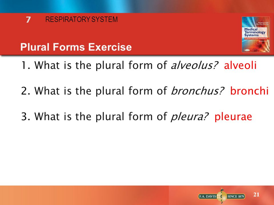 21 RESPIRATORY SYSTEM 7 Plural Forms Exercise 1.What is the plural form of alveolus? alveoli 2.What is the plural form of bronchus? bronchi 3.What is