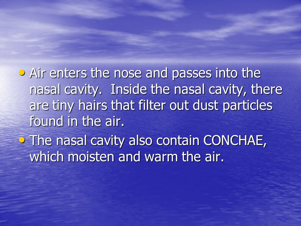 Air enters the nose and passes into the nasal cavity.