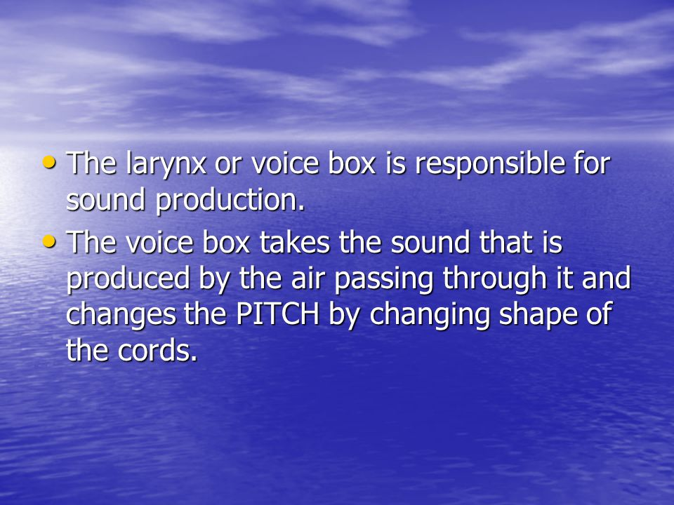 The larynx or voice box is responsible for sound production.