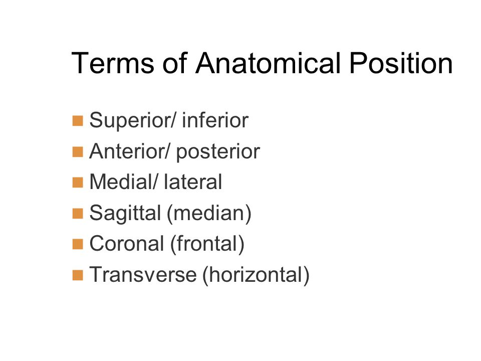 Terms of Anatomical Position Superior/ inferior Anterior/ posterior Medial/ lateral Sagittal (median) Coronal (frontal) Transverse (horizontal)