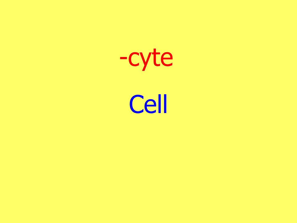 -cyte Cell