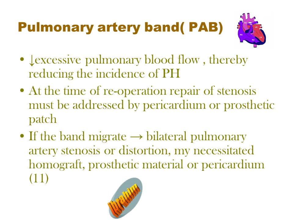 Pulmonary artery band( PAB) ↓ excessive pulmonary blood flow, thereby reducing the incidence of PH At the time of re-operation repair of stenosis must be addressed by pericardium or prosthetic patch If the band migrate → bilateral pulmonary artery stenosis or distortion, my necessitated homograft, prosthetic material or pericardium (11)