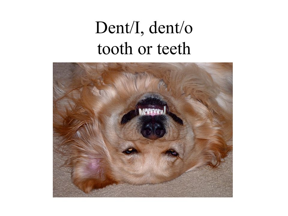 Dent/I, dent/o tooth or teeth