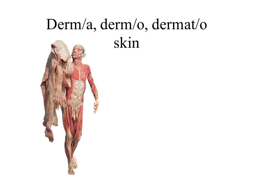 Derm/a, derm/o, dermat/o skin