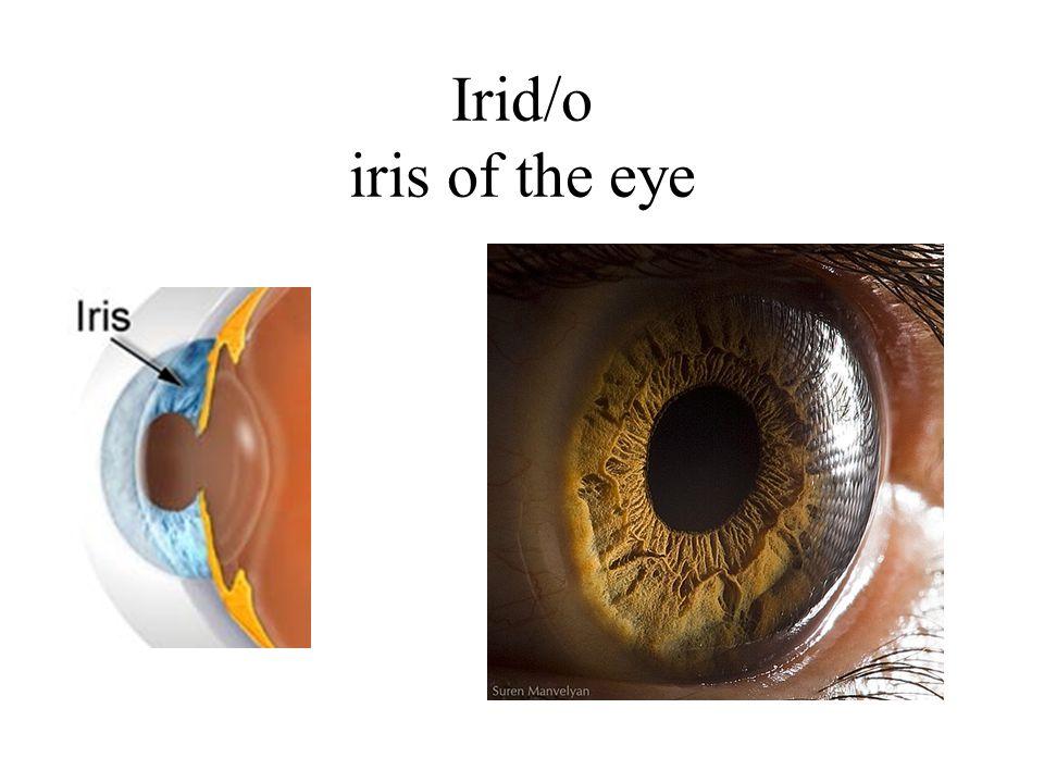Irid/o iris of the eye