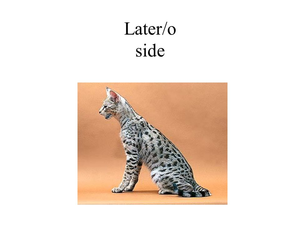 Later/o side