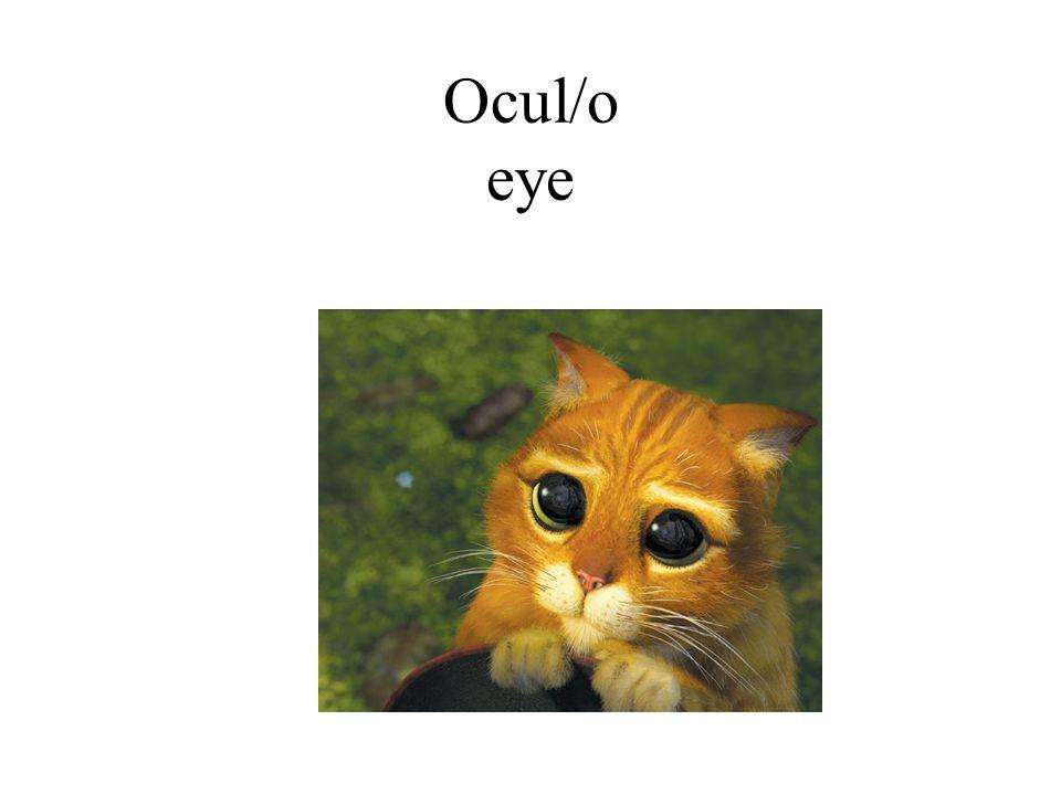 Ocul/o eye