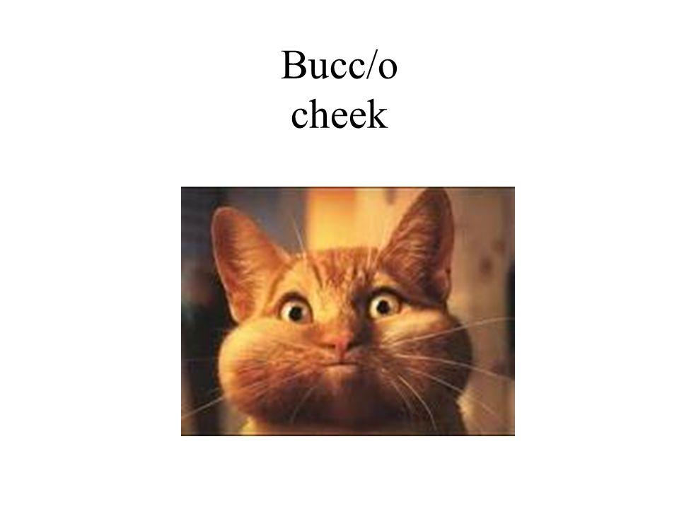 Bucc/o cheek