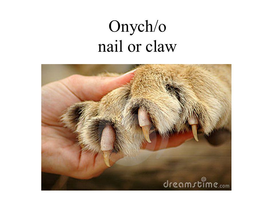 Onych/o nail or claw
