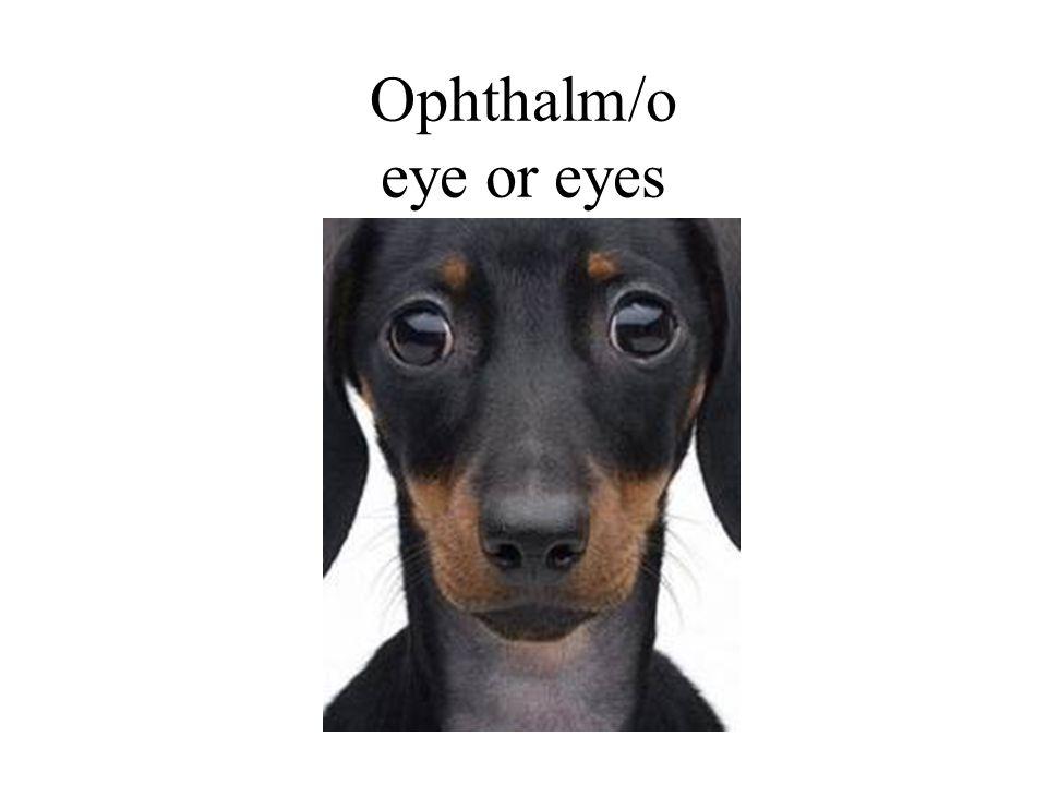 Ophthalm/o eye or eyes