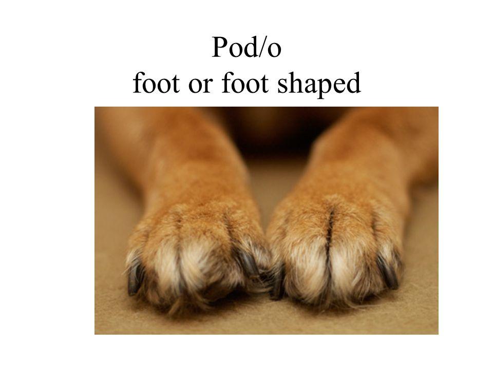 Pod/o foot or foot shaped