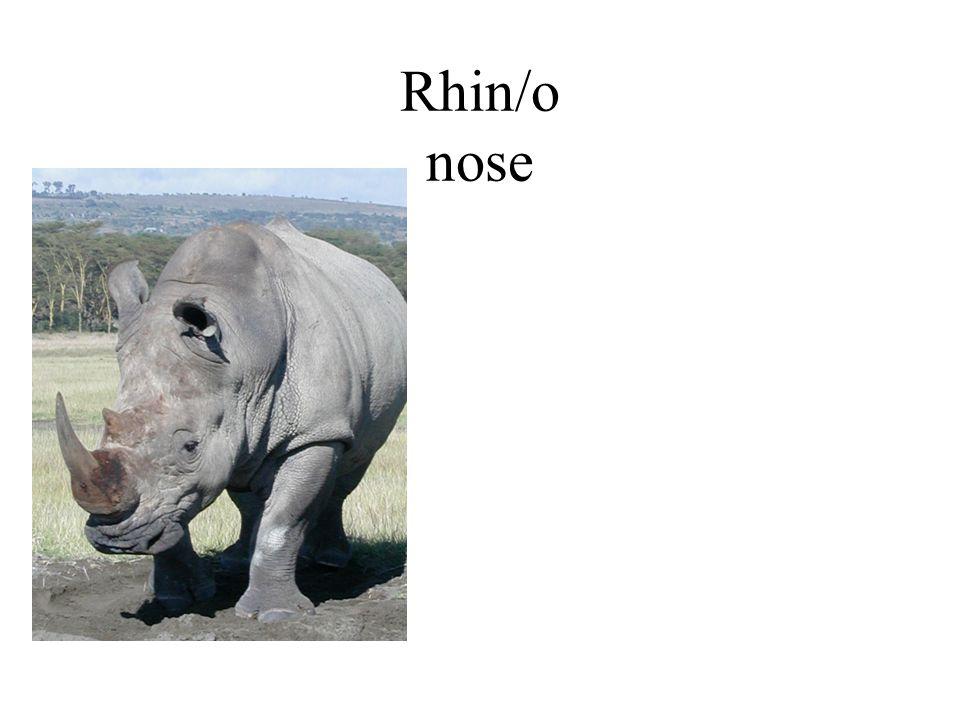 Rhin/o nose