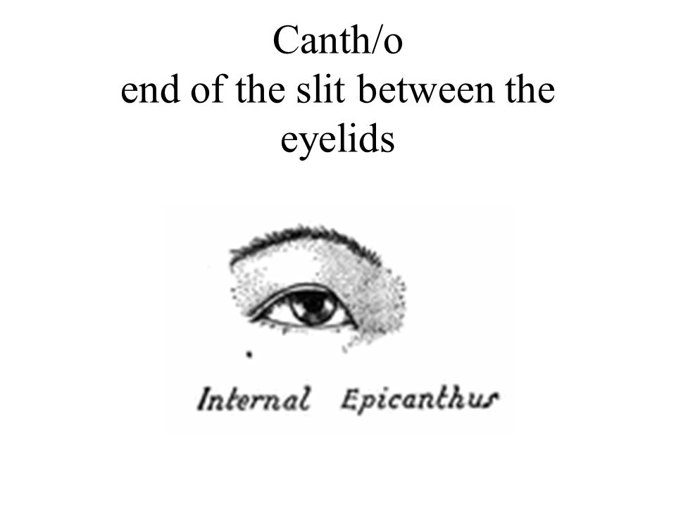 Canth/o end of the slit between the eyelids