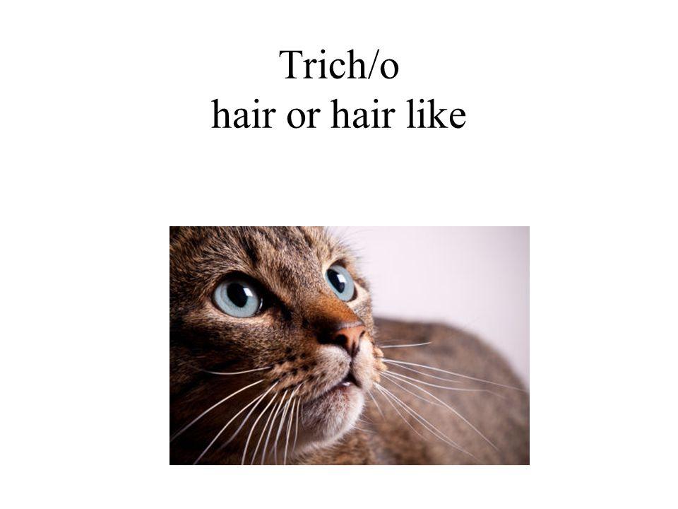 Trich/o hair or hair like