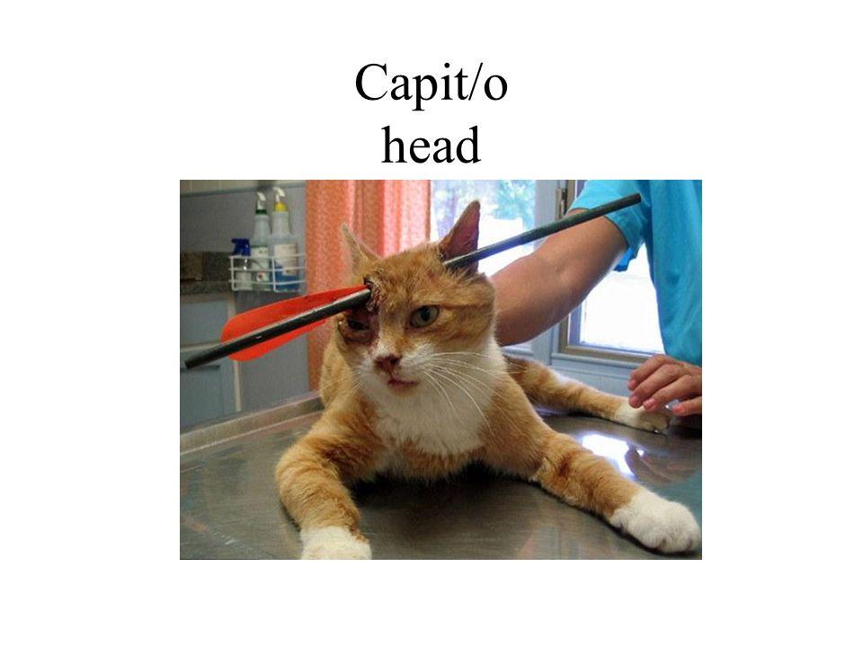 Capit/o head