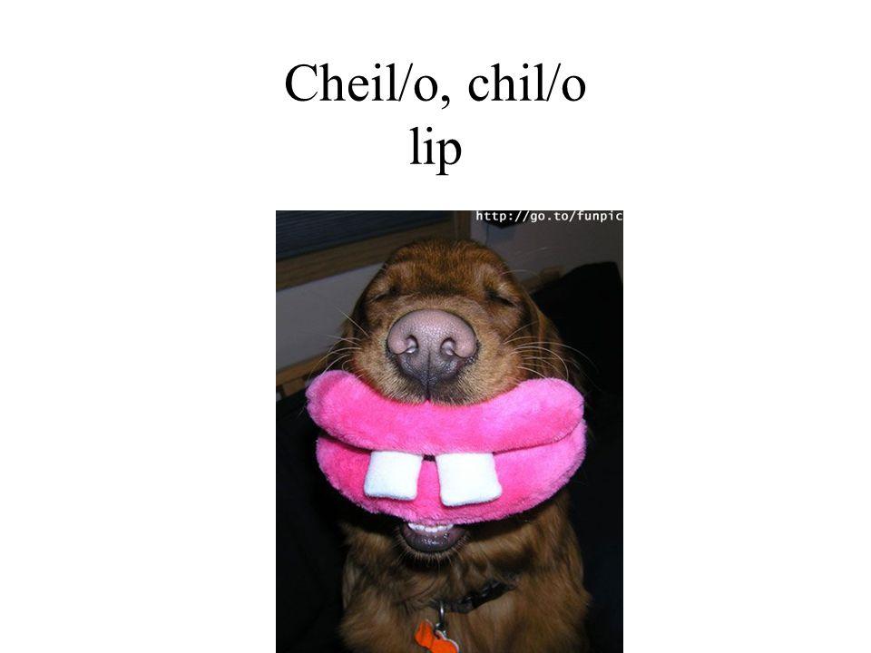 Cheil/o, chil/o lip