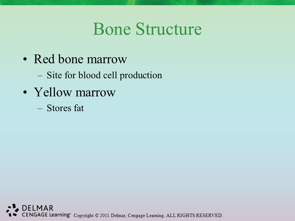Copyright © 2011 Delmar, Cengage Learning. ALL RIGHTS RESERVED. Osteoporosis