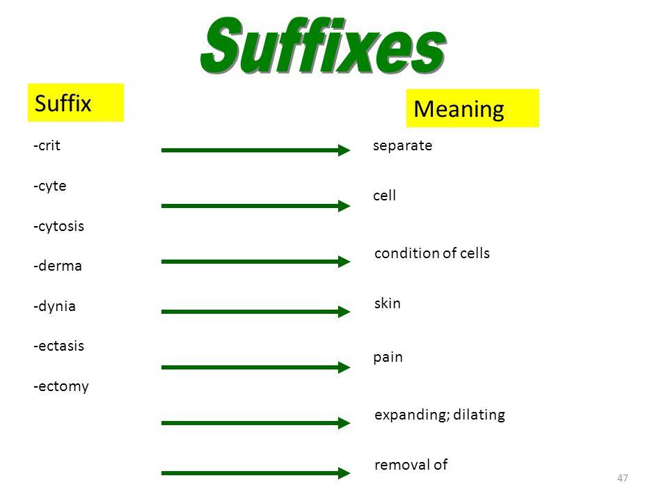 46 Suffixes (ad–crine) SuffixMeaning -ad -algia -asthenia -blast -cidal -clast -crine toward pain breaking weakness immature; forming destroying; kill