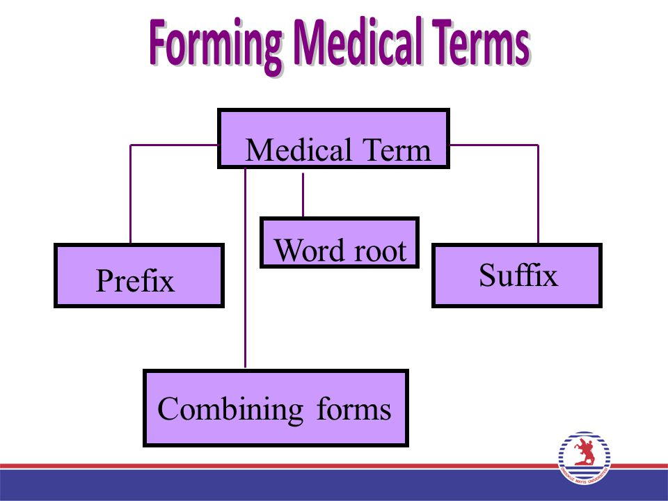 Forming Medical Terms Medical Term Prefix Word root Suffix Combining forms