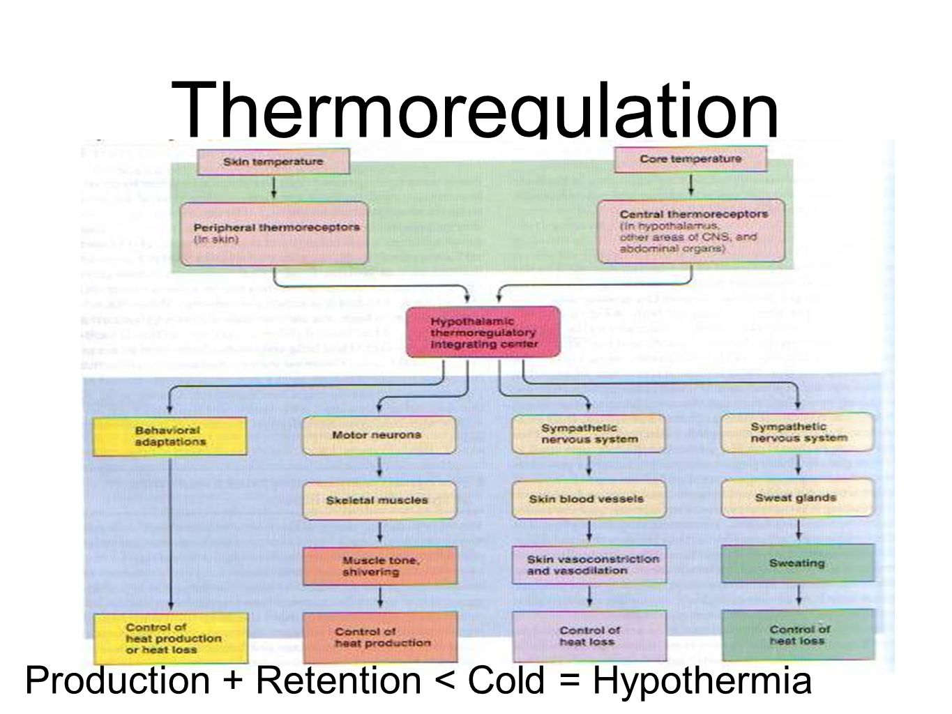 Thermoregulation test Production + Retention < Cold = Hypothermia