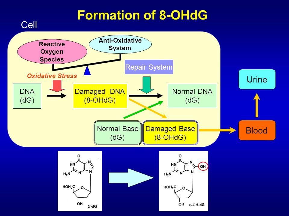 Damaged DNA (8-OHdG) Blood Urine Reactive Oxygen Species Repair System Damaged Base (8-OHdG) Cell Oxidative Stress Normal DNA (dG) Normal Base (dG) DN
