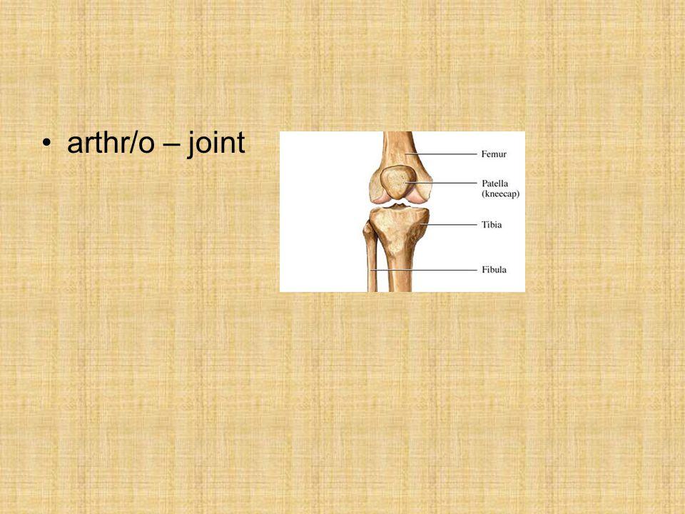 arthr/o – joint