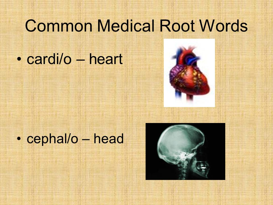 Common Medical Root Words cardi/o – heart cephal/o – head