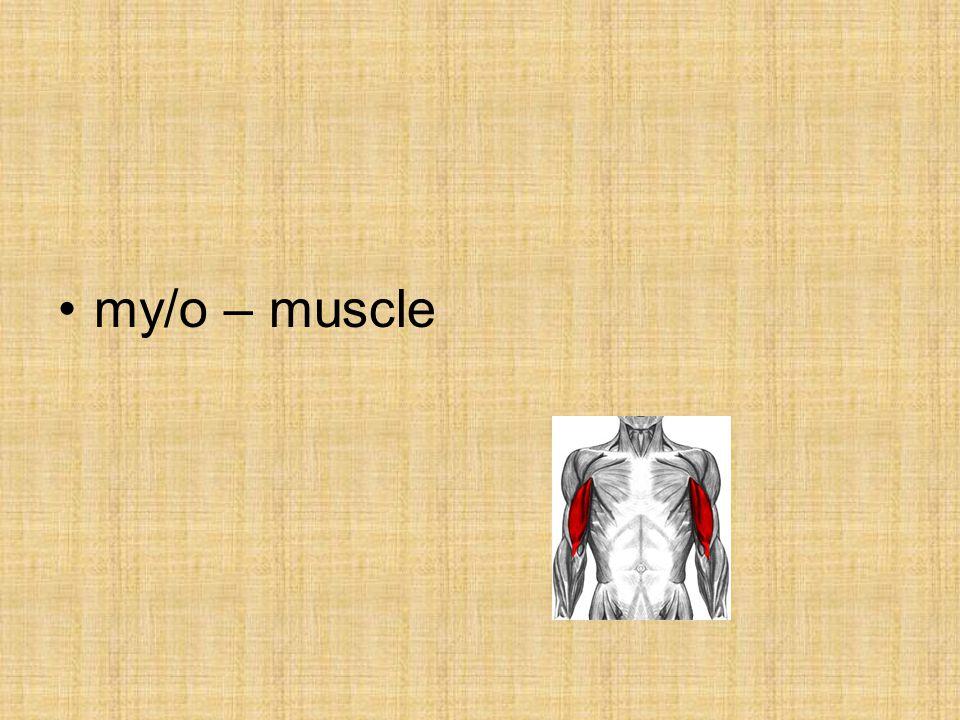 my/o – muscle