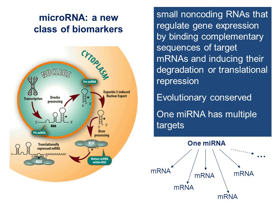 mRNA One miRNA mRNA … small noncoding RNAs that regulate gene expression by binding complementary sequences of target mRNAs and inducing their degradation or translational repression Evolutionary conserved One miRNA has multiple targets microRNA: a new class of biomarkers