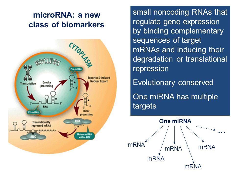 Diagnostic/prognostic miRNAs in lung cancer Diagnostic miRNA signatures let-7a: target KRAS Takamizawa et al., 2004 43 miRNAs (let-7a, miR-205, miR-126, miR-21) Yanaihara et al., 2006 miR-205  SCC; miR-21  ADC Lebanony et al., 2009 Prognostic miRNAs let-7a, miR-221, miR-137, miR-372 & miR-182 ∗ Yu et al., 2008 ↓ miR-34a: targets C-MET, BCL2 Gallardo et al., 2009 ↓let-7a, -34a, 34c, 25, -91 34 miRNAs  ADC vs.