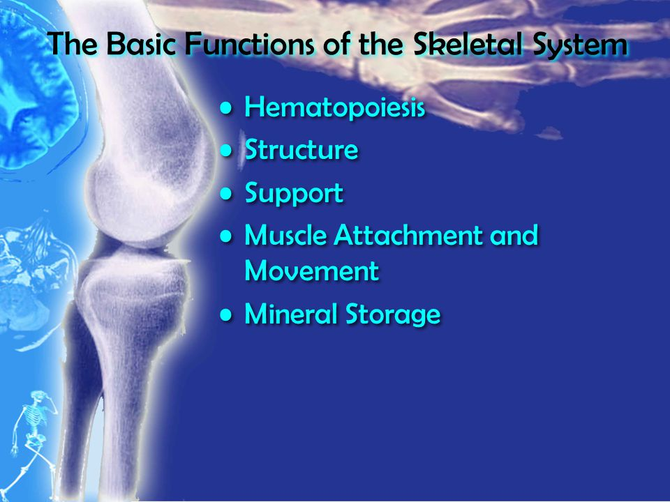 The Basic Functions of the Skeletal System Hematopoiesis Structure Support Muscle Attachment and Movement Mineral Storage Hematopoiesis Structure Support Muscle Attachment and Movement Mineral Storage