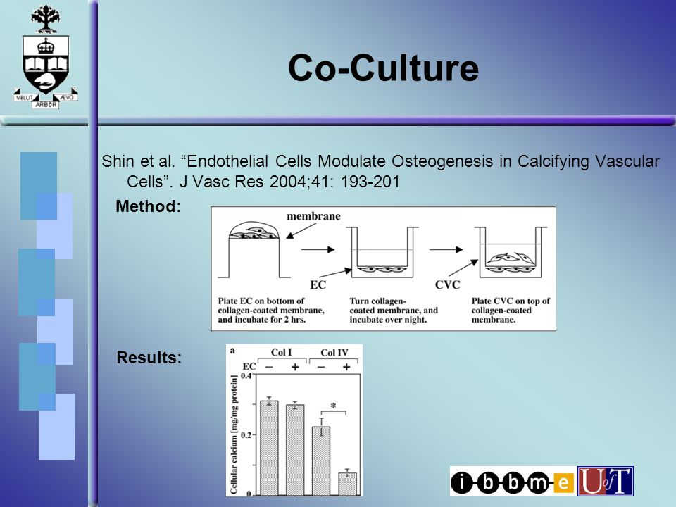 Co-Culture Shin et al. Endothelial Cells Modulate Osteogenesis in Calcifying Vascular Cells .