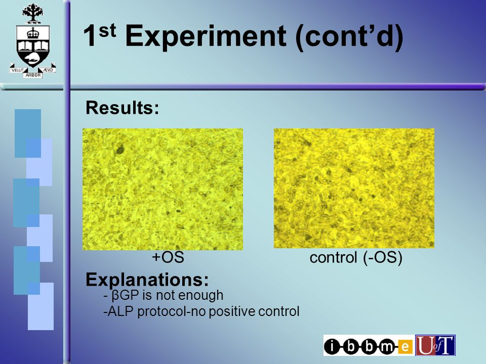 1 st Experiment (cont'd) Results: +OS control (-OS) Explanations: - βGP is not enough -ALP protocol-no positive control