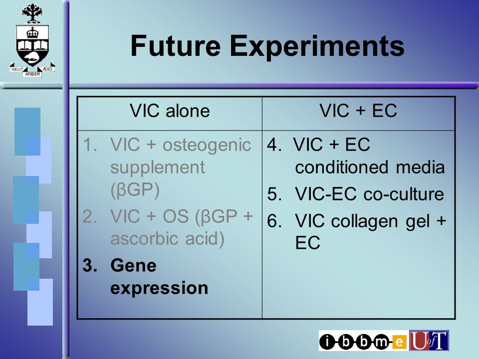 Future Experiments VIC aloneVIC + EC 1.VIC + osteogenic supplement (βGP) 2.VIC + OS (βGP + ascorbic acid) 3.Gene expression 4.