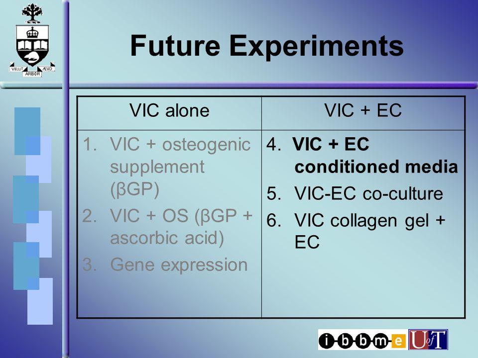 Future Experiments VIC aloneVIC + EC 1.VIC + osteogenic supplement (βGP) 2.VIC + OS (βGP + ascorbic acid) 3.Gene expression 4. VIC + EC conditioned me