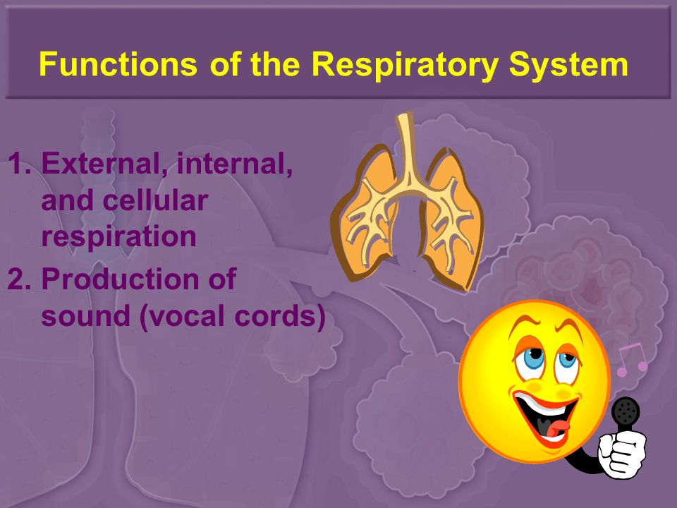Functions of the Respiratory System 1.External, internal, and cellular respiration 2.Production of sound (vocal cords)