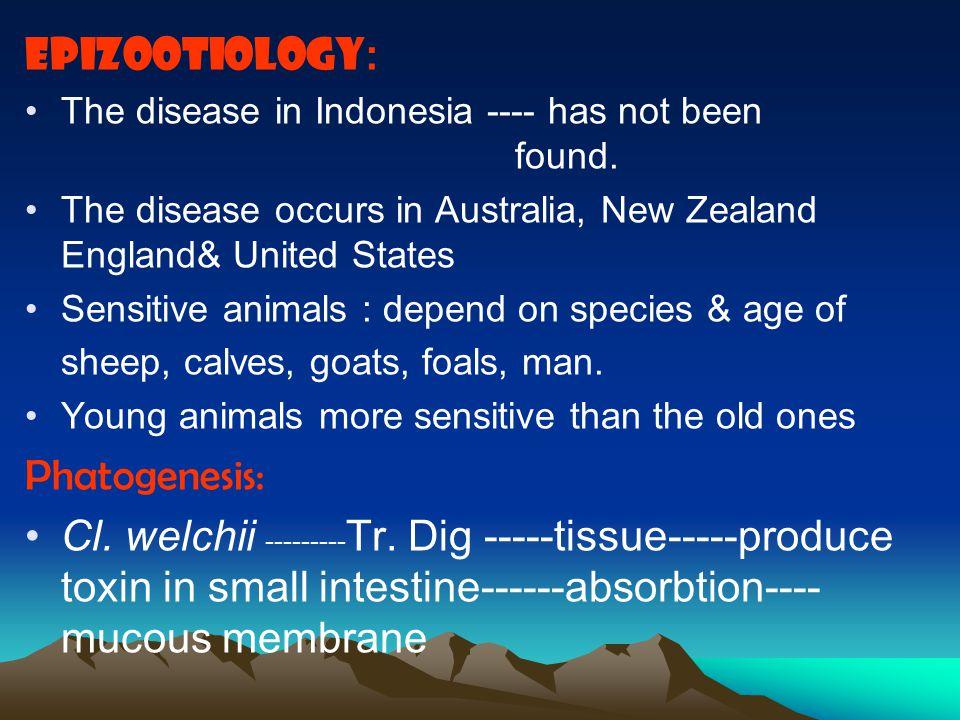 Produce 4 toxins: alpha, beta, epsilon & iota Toxin is heat-labile Toxin + chemicals ----Toxoid : Antigenicity + Toxicity - Characteristic of the majo