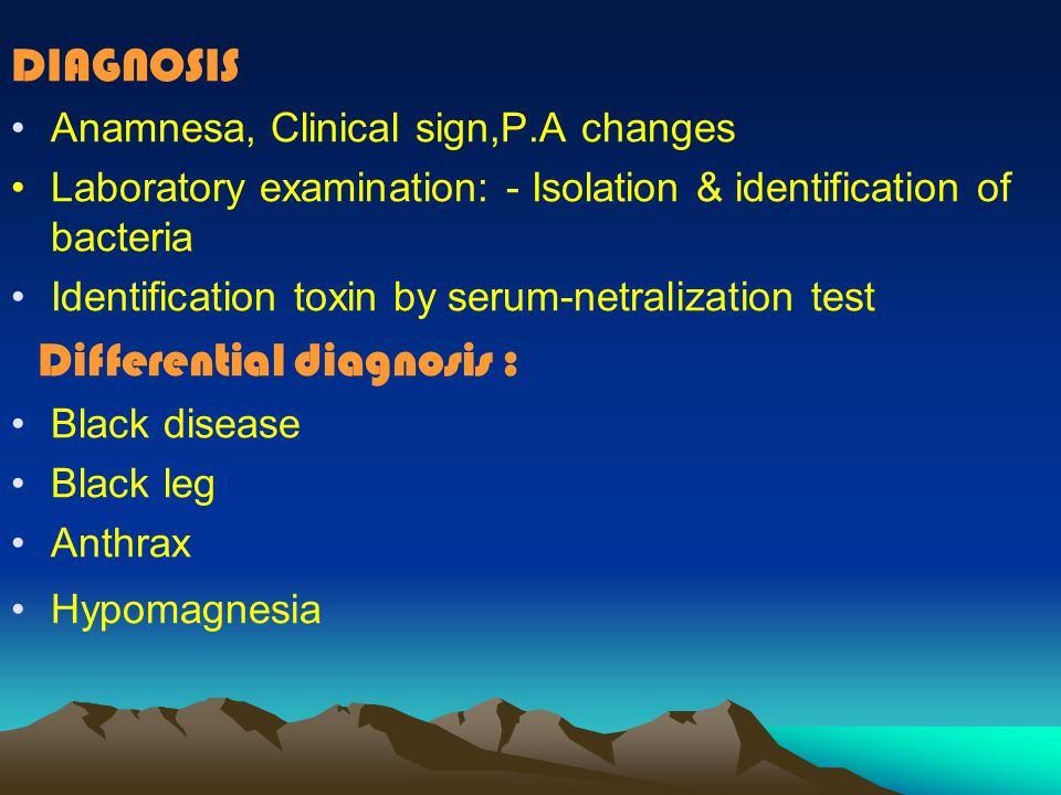 Cl.welchii type E : This type causes Enterotoxemia with hemor- rhagic & necrotic enteritis in lambs & calves P.A : abomasum mucous & small intestine -