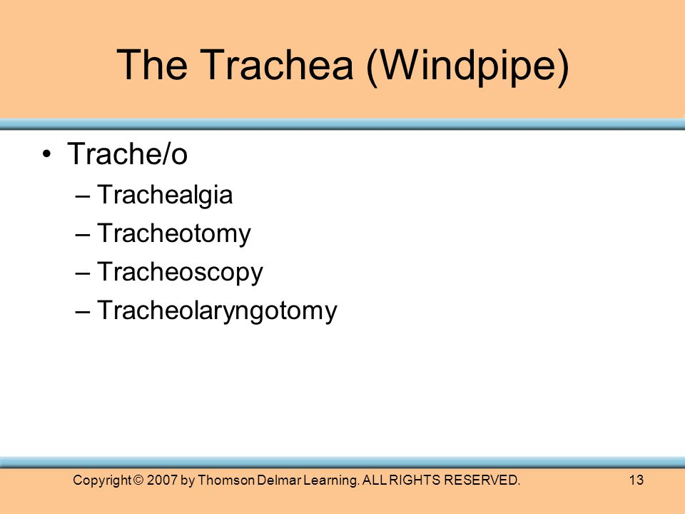 Copyright © 2007 by Thomson Delmar Learning. ALL RIGHTS RESERVED.13 The Trachea (Windpipe) Trache/o –Trachealgia –Tracheotomy –Tracheoscopy –Tracheola