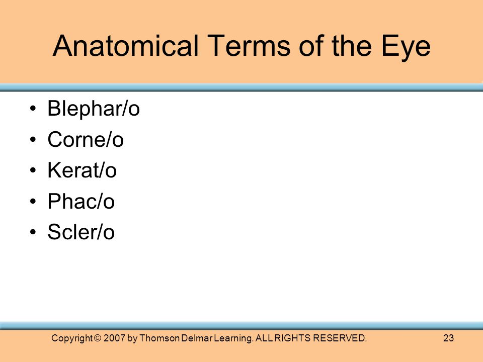 Copyright © 2007 by Thomson Delmar Learning. ALL RIGHTS RESERVED.23 Anatomical Terms of the Eye Blephar/o Corne/o Kerat/o Phac/o Scler/o