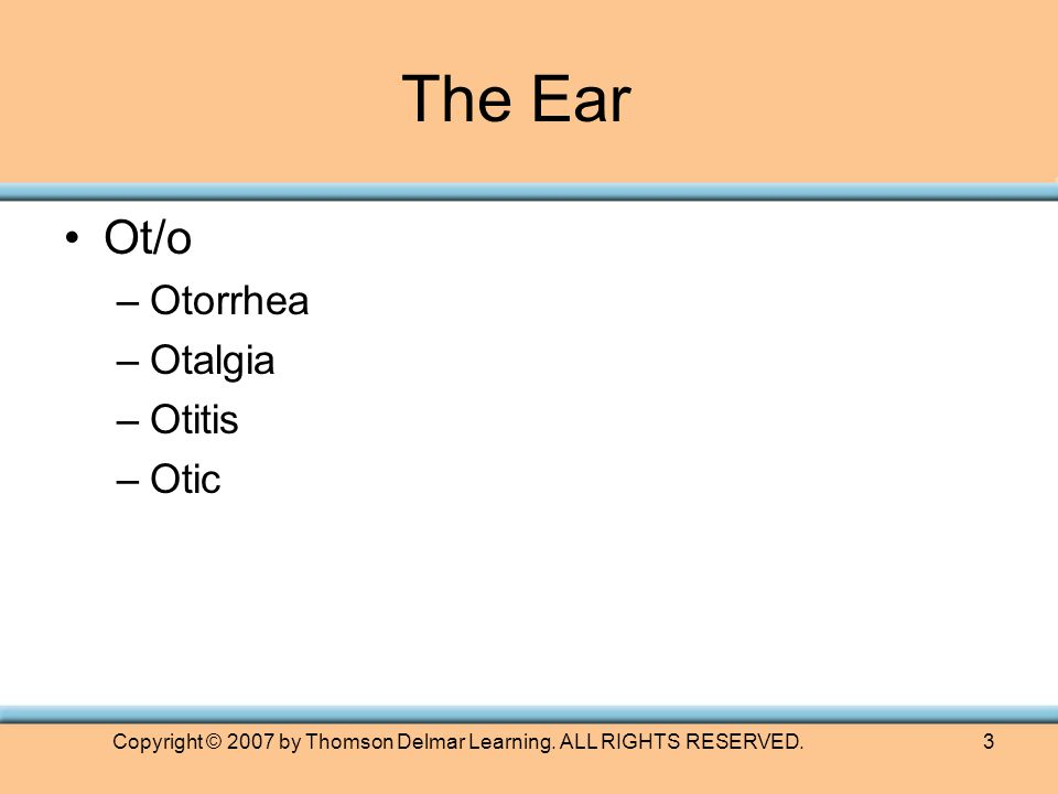 Copyright © 2007 by Thomson Delmar Learning. ALL RIGHTS RESERVED.3 Ot/o –Otorrhea –Otalgia –Otitis –Otic The Ear