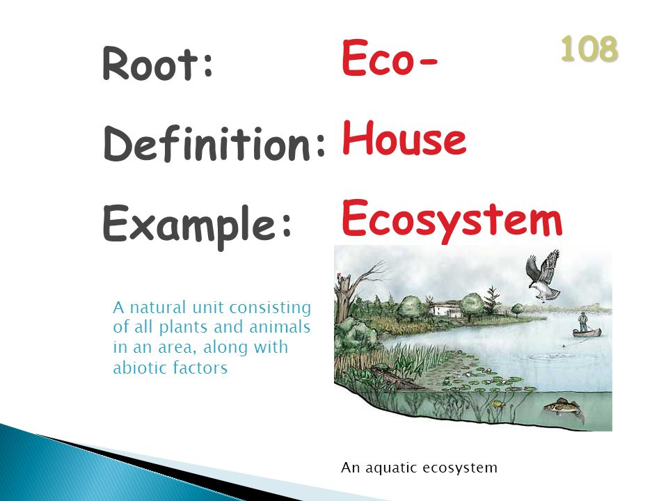 108 Root: Definition: Example: Eco- House Ecosystem A natural unit consisting of all plants and animals in an area, along with abiotic factors An aquatic ecosystem
