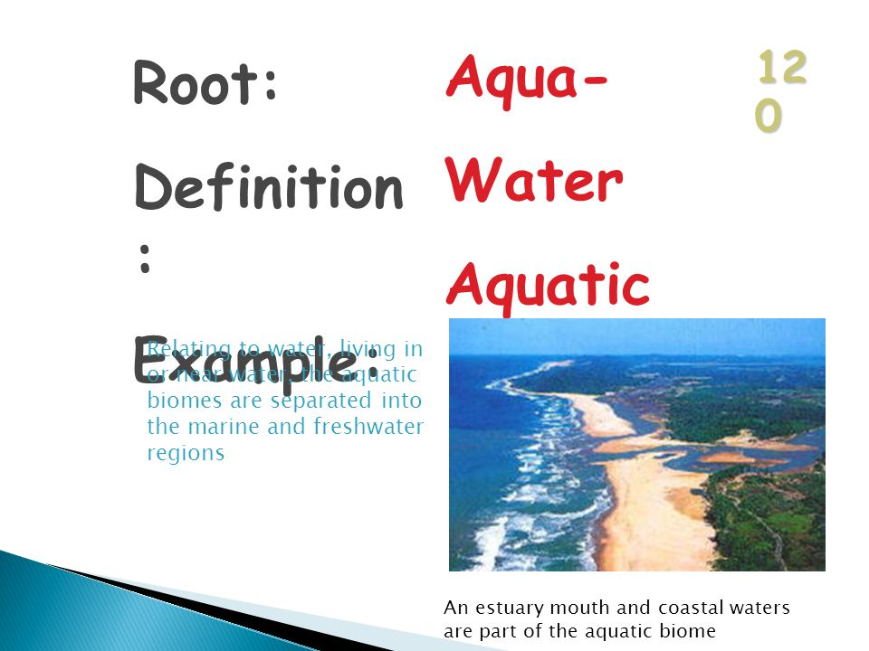 12 0 Root: Definition : Example: Aqua- Water Aquatic Relating to water, living in or near water, the aquatic biomes are separated into the marine and freshwater regions An estuary mouth and coastal waters are part of the aquatic biome