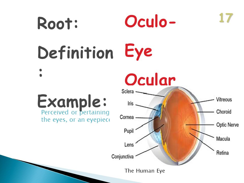 17 Root: Definition : Example: Oculo- Eye Ocular Perceived or pertaining to the eyes, or an eyepiece The Human Eye