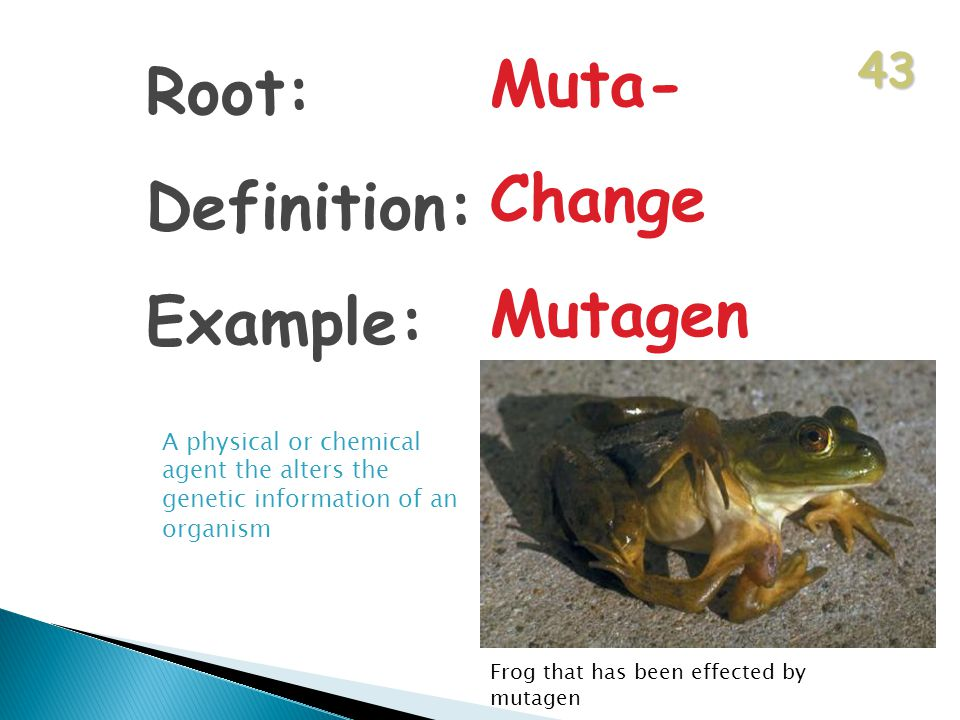 43 Root: Definition: Example: Muta- Change Mutagen A physical or chemical agent the alters the genetic information of an organism Frog that has been effected by mutagen