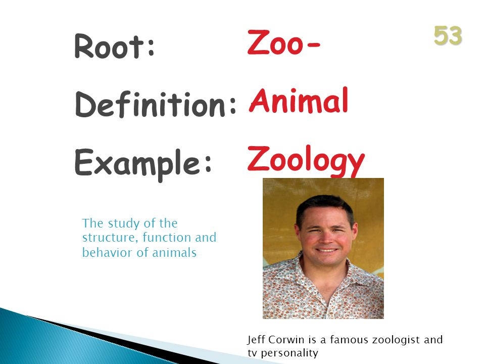 53 Root: Definition: Example: Zoo- Animal Zoology The study of the structure, function and behavior of animals Jeff Corwin is a famous zoologist and tv personality