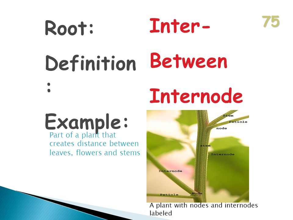 75 Root: Definition : Example: Inter- Between Internode Part of a plant that creates distance between leaves, flowers and stems A plant with nodes and internodes labeled